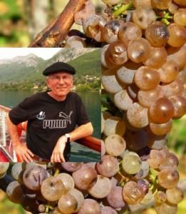 JD Lapèze grappe