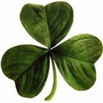 trèfle irlandais - Wikimedia CC 3.0