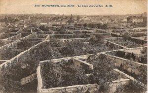 Murs à pêches - Wikipedia - Claude Villetaneuse - Domaine Public